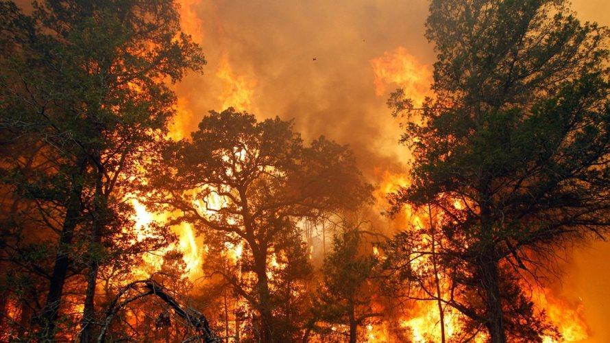 В районе действуют три лесных пожара