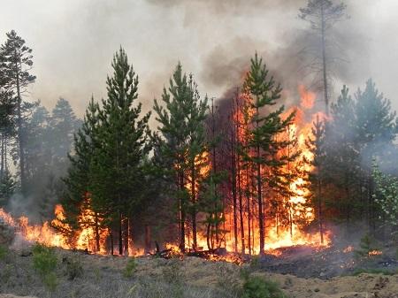 За лесопожарный сезон выгорела 21 тысяча гектаров тайги