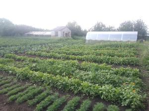 Реализация агробизнесобразования на территории Тулунского  муниципального района