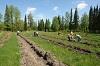 В районе восстановят около 15 тысяч гектаров леса