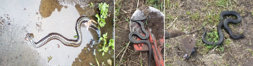 В подтопленных поселениях стало больше змей