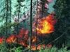 Количество лесных пожаров в районе снизилось