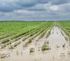 В районе приступают к выплатам компенсаций за утерянные поголовье и урожай