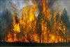 Ликвидирован лесной пожар