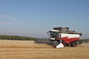 О ходе уборки зерновых