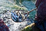 Охрана водных биологических ресурсов