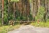 Доступ в леса ограничен до 21 августа