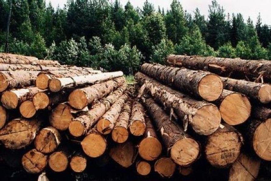 О порядке и нормативах заготовки гражданами древесины для собственных нужд  в Чунском районе