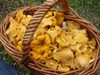Появились первые грибы. Как не отравиться дарами леса