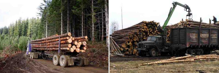 В районе приступают к усиленному контролю за оборотом леса