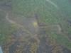 Выгорело 500 гектаров леса
