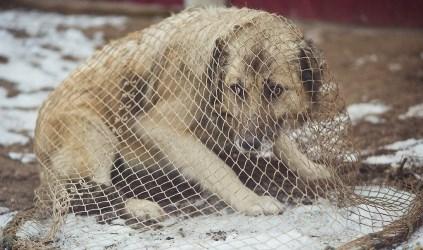 Финансирования на отлов безнадзорных собак недостаточно