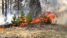 """ОГБУ """"Пожарно-спасательная служба Иркутской  области"""": Лесные пожары"""