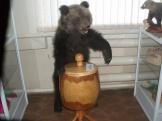 экспонат выставки- чучело медведя