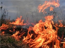 Палы травы – прямой путь к пожару!