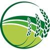 Селяне приступили к уборке зерновых