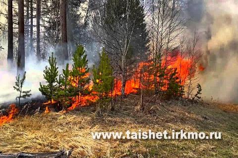 Оперативная информация о ситуации с лесными пожарами на 13 мая