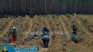 08.05.2018 Почти четыре тысячи саженцев сосны высадили недалеко от Узкого Луга. Черемховский район.