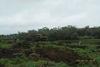 В Чунском районе уничтожают очаги произрастания дикорастущей конопли