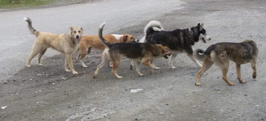 За год в районе отловят 112 бездомных собак