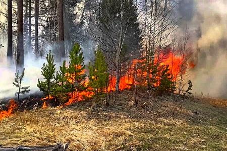 На территории района ликвидировано 11 лесных пожаров