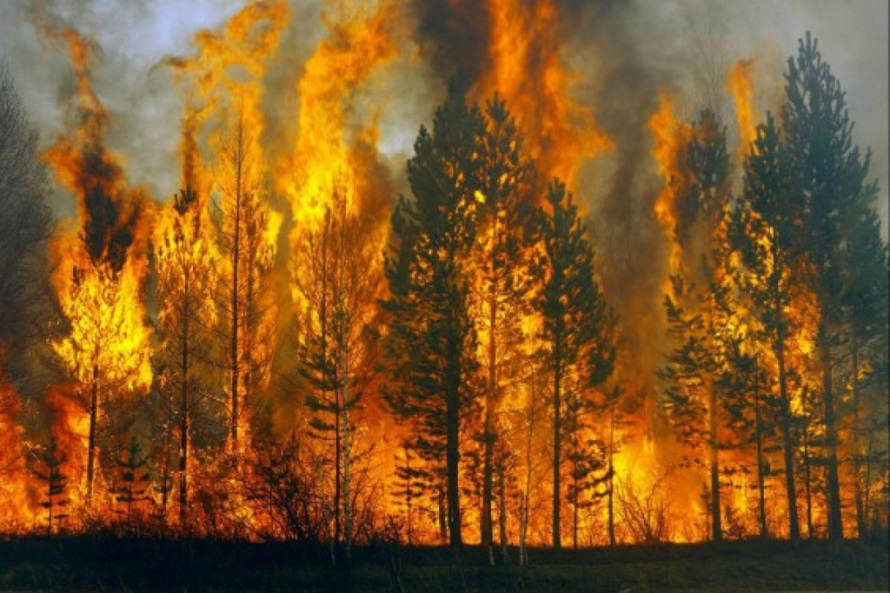 В лесах района сохраняется высокий класс пожарной опасности