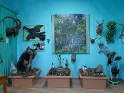 16 фото 4 зал фрагмент экспозиции местной фауны
