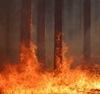 В районе из-за лесных пожаров введен режим ЧС