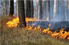 В Иркутской области начал действовать особый противопожарный режим