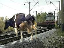 ПАМЯТКА владельцам скота, водителям гужевых повозок, погонщикам вьючных, верховых животных и скота