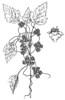 Объявлен карантин против сорных растений