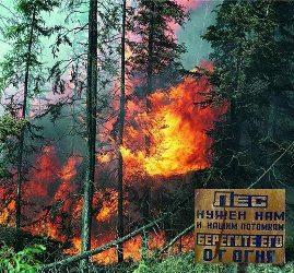 В Чунском районе введен особый противопожарный режим