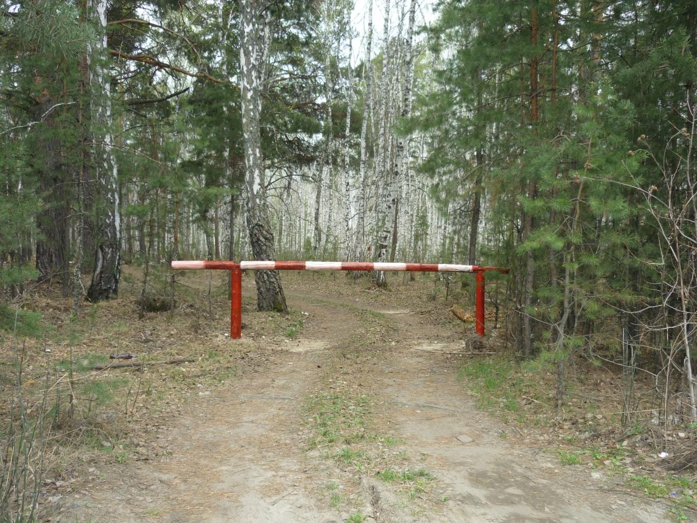 Вводится ограничение пребывания в лесах.