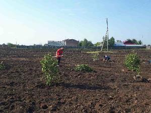 В центре села Икей разбит яблоневый сад