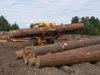 Чунские лесопромышленники заплатят 5 миллионов за справки