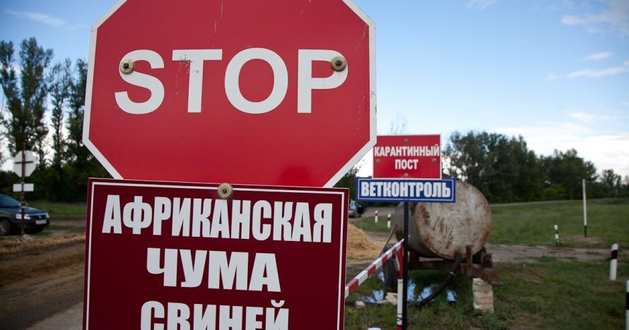 Свинина из Красноярска под строгим ветконтролем