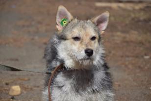 Светлана Бульбук: «Ситуация в поселениях с бродячими собаками не сильно хорошая!»