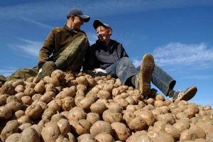 Будем с картофелем