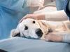 Чунская ветстанция проводит бесплатную  кастрацию и стерилизацию кошек и собак