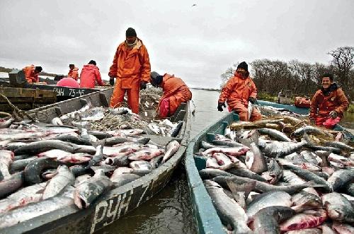 Внимание рыбодобывающих организаций и рыболовов-любителей!