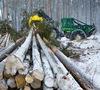 В октябре пройдет лесной аукцион для малого бизнеса