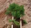 План по лесовосстановлению выполняется