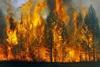 В районе действуют два лесных пожара