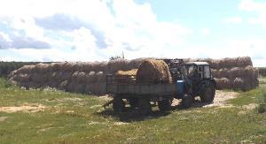 Идет заготовка кормов