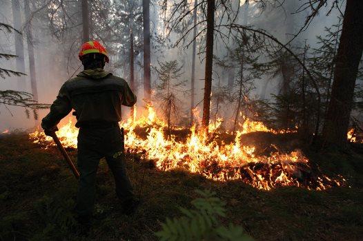 Количество лесных пожаров сократилось