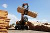 В районе проверяют пункты приема-отгрузки древесины