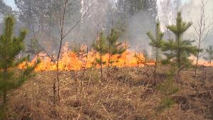 Информация о классах пожарной опасности в лесах Иркутской области 15 июня