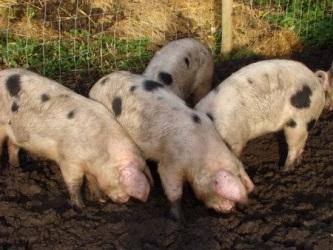 На комиссии по ЧС обсудили профилактику опасной болезни животных