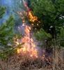 Самый крупный лесной пожар в районе локализован