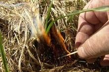 МЧС напоминает о недопустимости розжига костров, сухой растительности и мусора в пожароопасный сезон